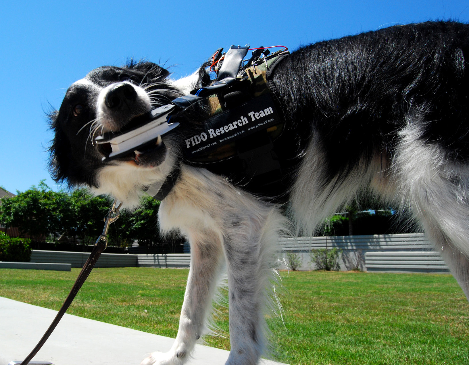 The Fido Project Wearable Technology For Service Dogs